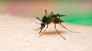 Malaria remains serious threat to millions of Africans
