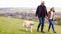 Council considers banning dogs from walking areas