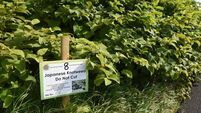 Councillors disagree on how to stop Japanese knotweed invading private estate
