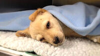 Puppy rescued from 'horrific' Carlow breeding farm loses fight for life