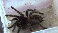 VIDEO: Alive and dead snakes, spiders and scorpions found in Cork neglect case