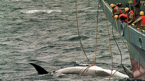 Australia, NZ rap Japans IWC pullout, commercial whaling