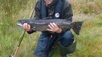 Sea trout population under threat, UCC research finds