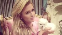 Paris Hilton 'considering full-time nanny for her dog'