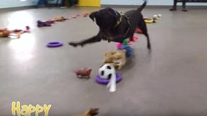 Dogs picking Christmas presents is what you need ahead of your Christmas shopping