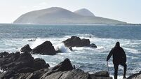 Seals part of Blaskets heritage and must be protected