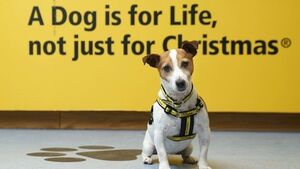 Dogs Trust Ireland launch campaign to highlight the 9,000 dogs they have rehomed
