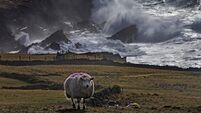 8 stormy pictures as Dennis the Menace blows through Ireland